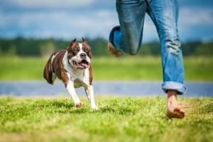 Foto: Hund jagt Mensch