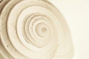 Foto einer versteinerten Schnecke
