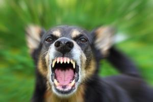 Foto eines bellenden Hundes